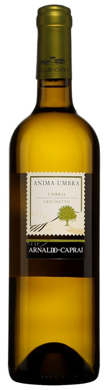 Anima Umbra Grechetto 2017